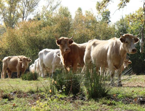 Abuso de antibióticos en ganadería industrial: un grave problema de salud pública